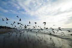 Mouettes de mer sur la côte Photographie stock