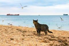 Chat sur la plage Photos stock