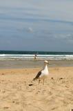Mouettes de plage de Hayle Towans Images stock