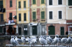 Mouettes de Portofino Photo stock