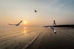 Mouettes en mer Image libre de droits