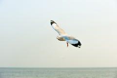 Mouettes en mer Photos libres de droits