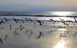 Mouettes en vol sur la plage au lever de soleil Photos stock