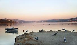 Mouettes et bateau en matin Photographie stock libre de droits