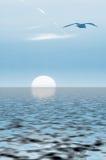 Mouettes et coucher du soleil Image stock