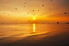 Mouettes et coucher du soleil Photographie stock