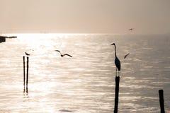 Mouettes et héron sur la plage Image libre de droits