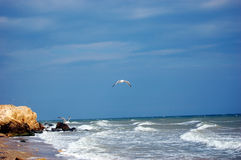 Mouettes et mer maritime fulminante photo stock