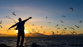 Mouettes et paix de coucher du soleil Images libres de droits