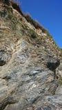 Mouettes nichant dans la falaise Images libres de droits