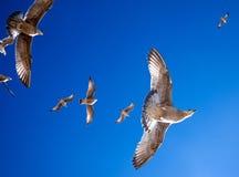 6 mouettes planant au-dessus, point de vue directement sous des toilettes Image stock