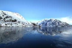 Mouettes reflétant sur le fjord figé Image libre de droits