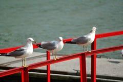 Mouettes se reposant sur le dock par la rivière Tennessee image libre de droits