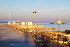 Mouettes se reposant sur le pilier l'hiver nuageux de temps de littoral de plage Scène de l'hiver Coucher du soleil photographie stock