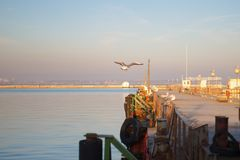Mouettes se reposant sur le pilier l'hiver nuageux de temps de littoral de plage Scène de l'hiver Coucher du soleil image stock