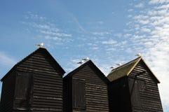 Mouettes sur des huttes de pêche, Hastings Image libre de droits