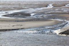 Mouettes sur des mudflats de Waddenzee, Hollande Photographie stock libre de droits