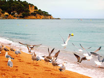 Mouettes sur la belle plage en Espagne Photographie stock libre de droits