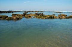 Mouettes sur la marée inférieure Images libres de droits