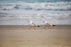 Mouettes sur la plage Images libres de droits