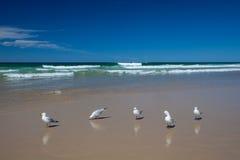 Mouettes sur la plage Image stock