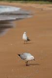 Mouettes sur la plage Photographie stock libre de droits