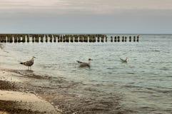 Mouettes sur la plage Image libre de droits