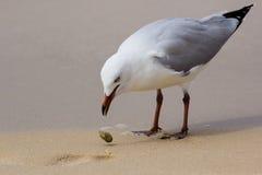 Mouettes sur la plage Photo libre de droits