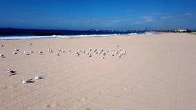 Mouettes sur la plage australienne à sable jaune banque de vidéos
