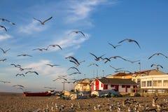Mouettes sur la plage dans le village de pêche, l'Océan Atlantique Voyage Images libres de droits