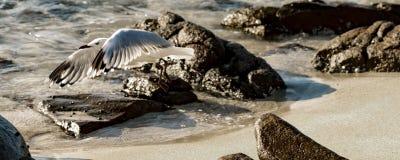 Mouettes sur la plage photographie stock