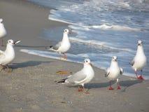 mouettes sur le bord de la mer Photo libre de droits