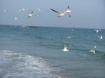 mouettes sur le bord de la mer Photographie stock