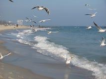 mouettes sur le bord de la mer Image libre de droits