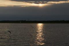 Mouettes sur le fond de coucher du soleil images stock