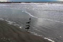 Mouettes sur le sable Photographie stock libre de droits