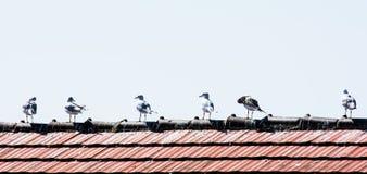 Mouettes sur le toit Images libres de droits