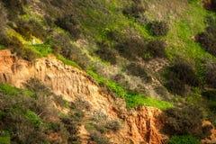 Mouettes sur les collines sur le Praia DA Rocha Photographie stock libre de droits