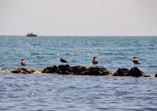 Mouettes sur un récif en mer Photographie stock libre de droits