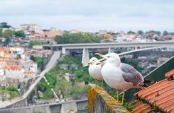 Mouettes sur un toit à Porto Photo stock