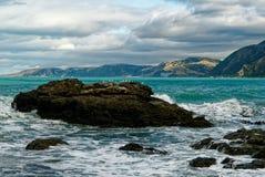 Mouettes sur une île rocheuse avec les montagnes derrière image libre de droits