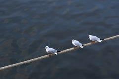 Mouettes sur une corde Image stock