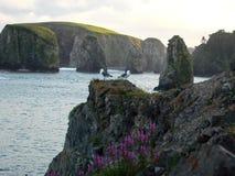 Mouettes sur une falaise image libre de droits