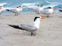 Mouettes sur une plage Images libres de droits