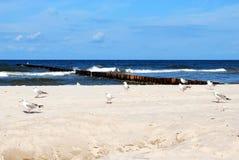 Mouettes sur une plage Image libre de droits
