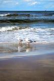 Mouettes sur une plage Photographie stock