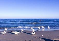 Mouettes sur une plage à la mer Image libre de droits