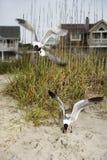 Mouettes swooping sur la plage. Photographie stock libre de droits