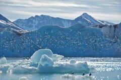 Mouettes tridactyles au glacier du Monaco dans le Svalbard Photo stock