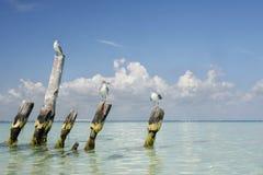Mouettes tropicales photo libre de droits